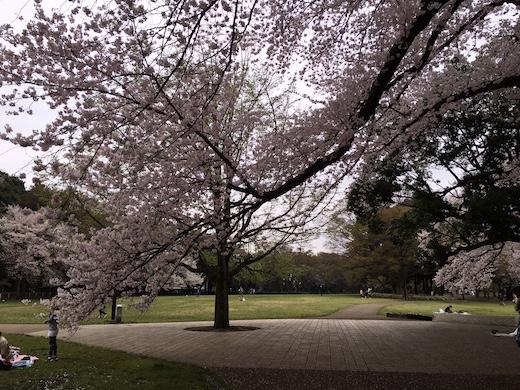 桜2016.JPG